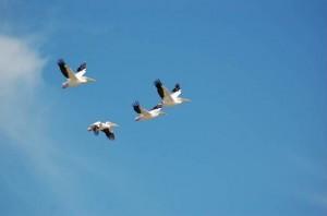 birds4-300x198