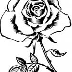 rose_sketch-150x150 (1)