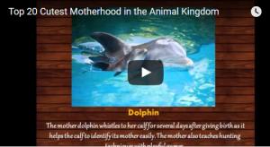 top 20 cutest motherhood in the animal kingdom